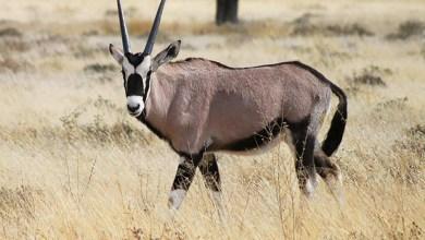 براري ناميبيا إحدى عجائب أفريقيا