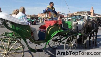 صورة المغرب.. كورونا يجوع الخيول مع اختفاء السياح