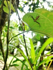 Hamataliwa! La Selva Biological Station, Costa Rica