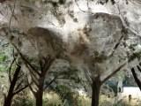 A very dense portion of webbing.