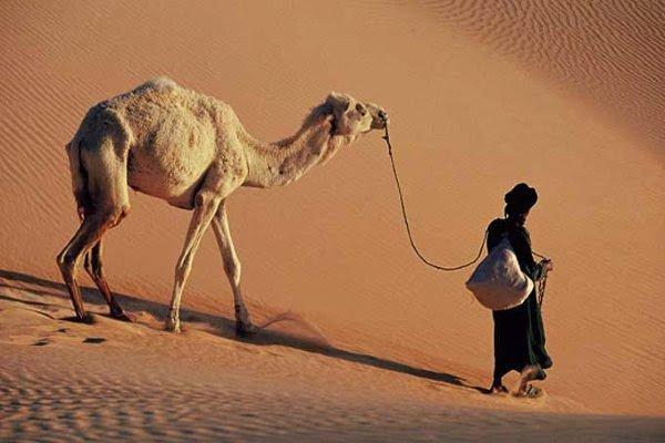 الوفاء في العربي