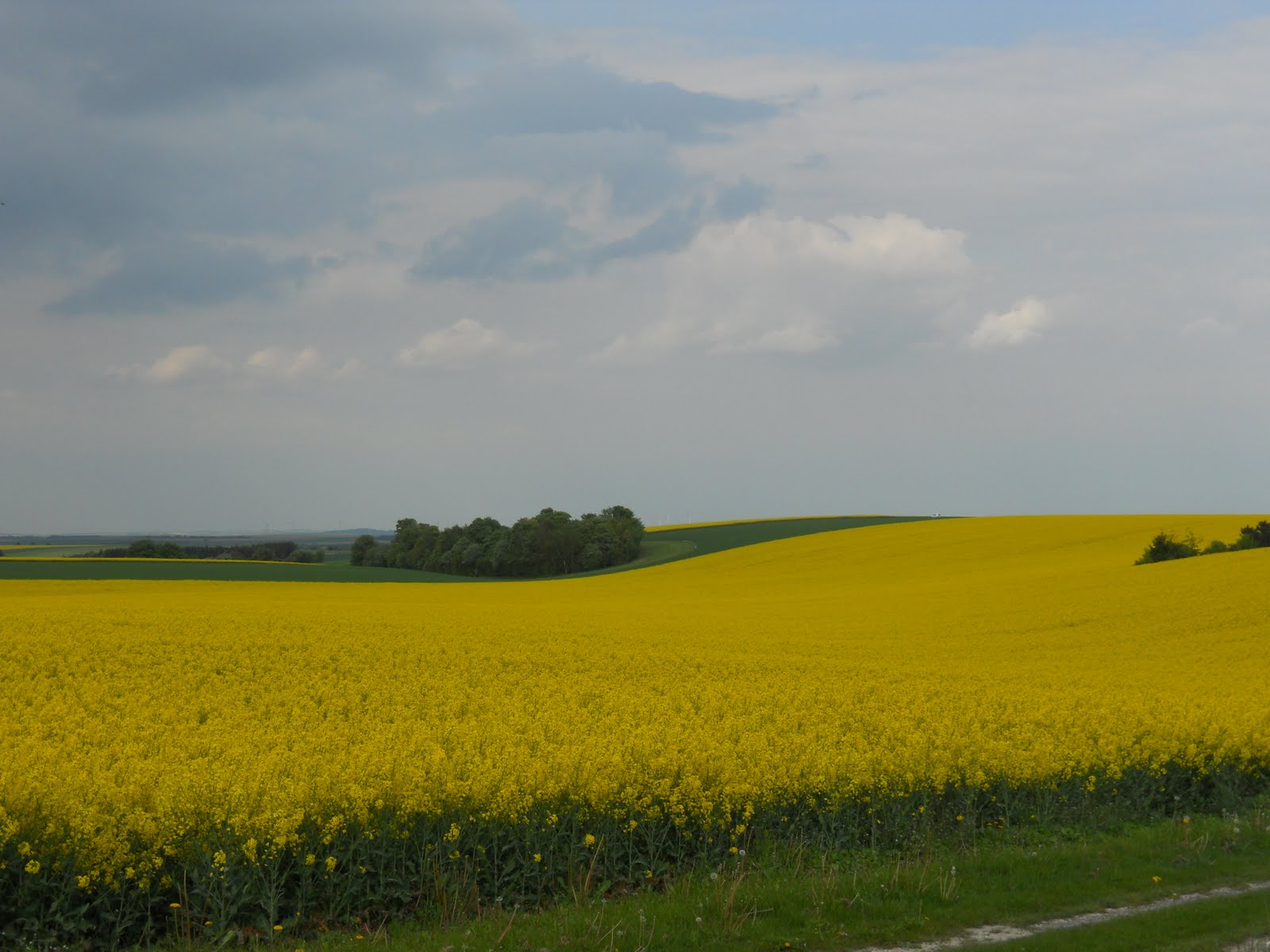 Fremont Mustard Fields If You Can Read This Thank A Teacher