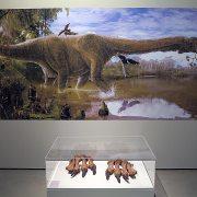 Garras de dinosaurio de la era Secundaria.