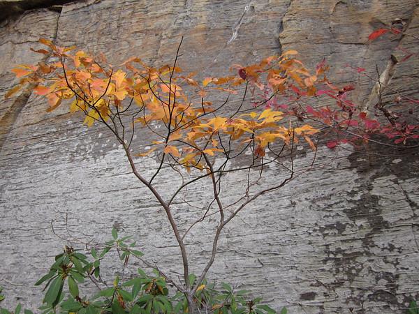 Kentucky foliage