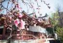 桃祭り – 2000体の雛人形と迎える春の素盞雄神社