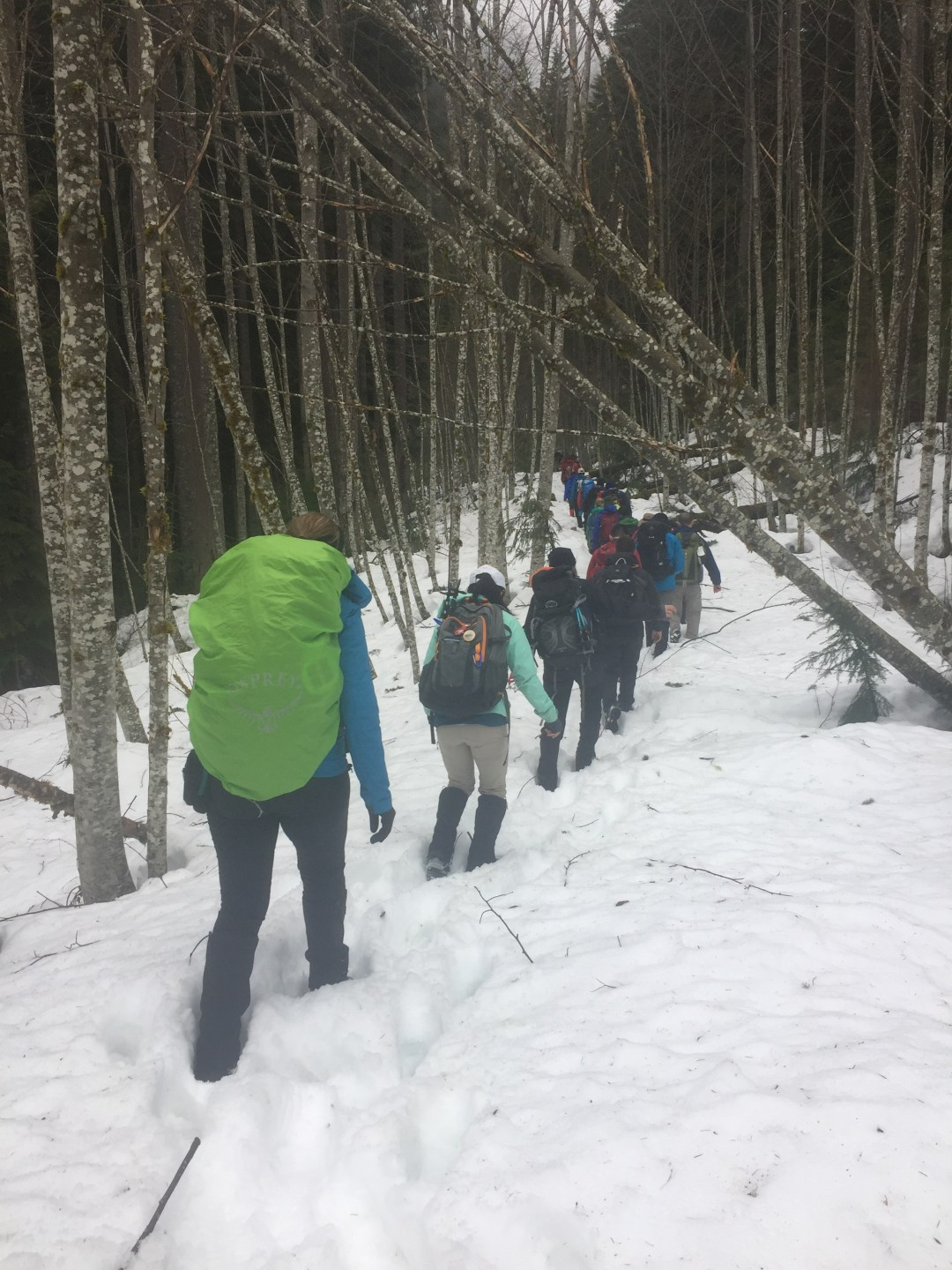 A line of hikers walking in the snow to the final navigation test for the Wilderness First Aid class