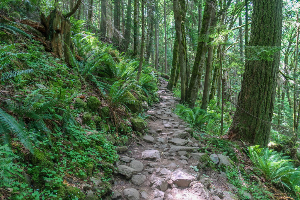 A rocky hiking trail leads uphill through the forest filled with ferns and trees