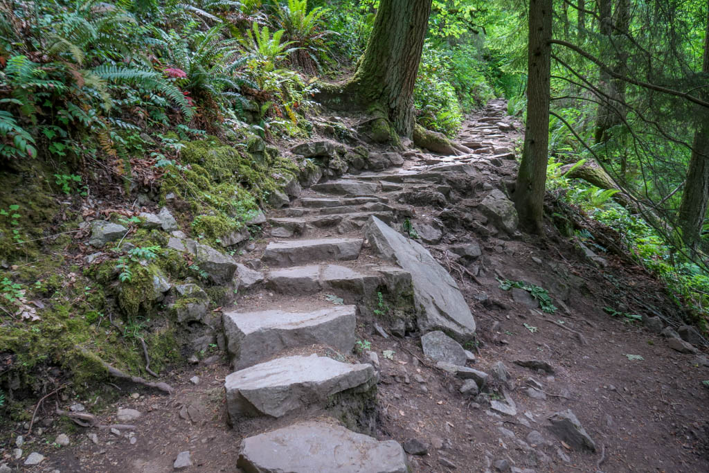 A trail comprised of rocky steps leads uphill into the forest