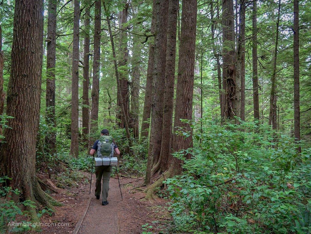Daniel walks through the forest along Ozette Triangle Loop Trail