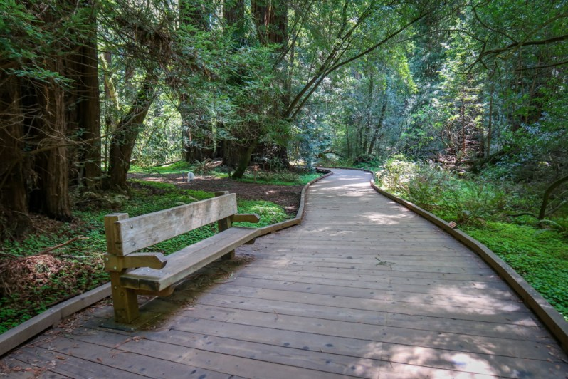 Park bench along a wooden path in Muir Woods National Monument