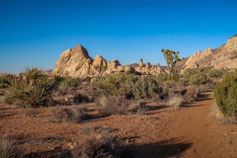 High desert scene with large boulders in the distance, yucca and Joshua Trees.