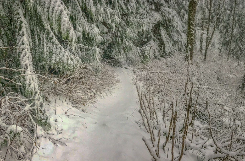 A hiking trail in the forest is covered with a blanket of snow about 6 inches deep