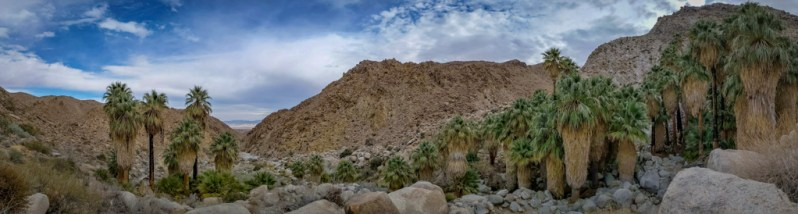 A panorama view of 49 Palms Oasis