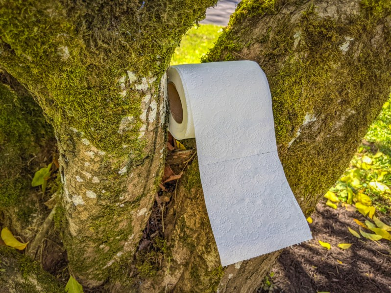 A roll of toilet paper in a tree, useful for when one is going to pee outdoors.