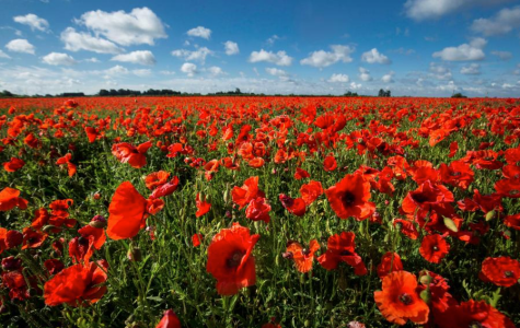 Armistice Day: Lest The World Forgets
