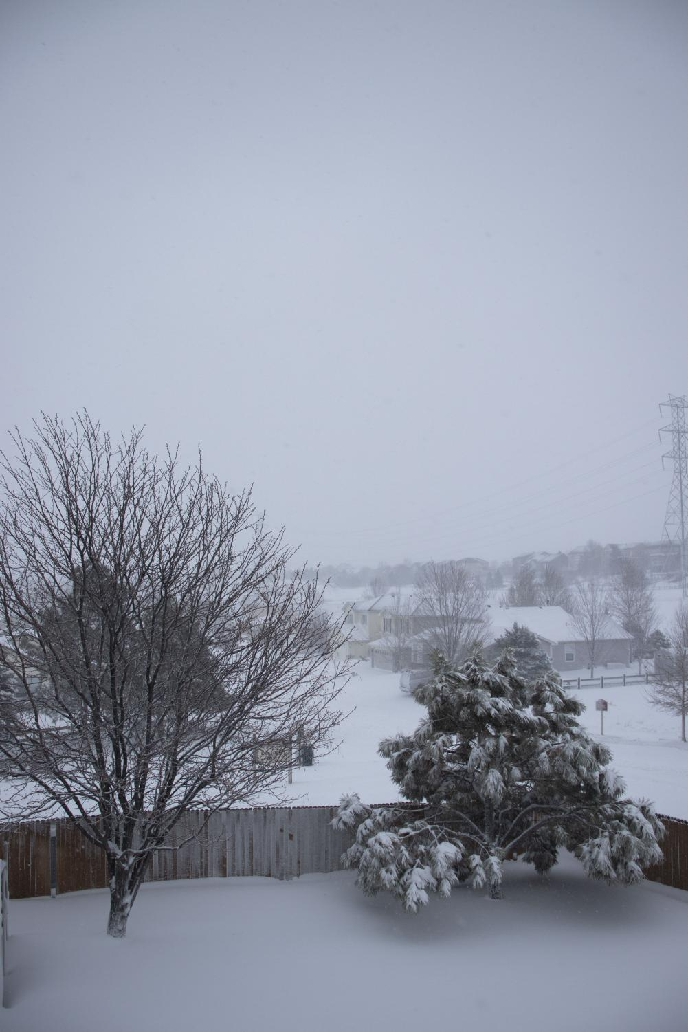 A gorgeous winter view during the March 2019 blizzard that buried Denver and surrounding areas.