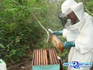 Apicultor mostra seu apiário