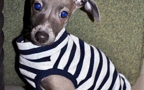 子犬のBuono!(ボーノ!)が生後2か月の時我が家へ来てくれました@facebook