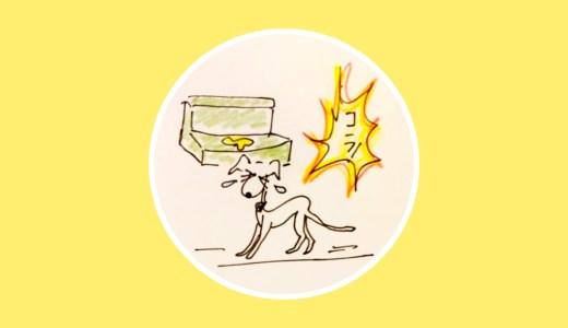 トイレのタイミングとかけ声【犬のしつけ・犬の育て方 vol.14】