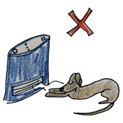 季節ごとの健康管理|冬は防寒対策|皮膚トラブル【犬の育て方 vol.49】