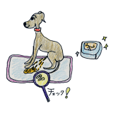 犬の排泄について オシッコ【犬の育て方 vol.60】