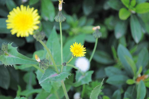 今日の花「近所の公園」|春の息吹を感じるイロトリドリの花