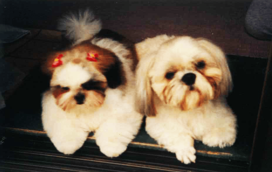 犬の成長その6|5年~7年ぐらいの高齢期【犬の育て方 vol.45】