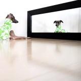 フレッシュグリーンハイビスカス柄でイタグレ・ウィペット犬服を作ってみた!
