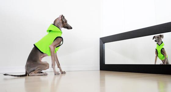 イタグレ犬服|ご要望の多かったサイズ展開を6サイズに増やしました