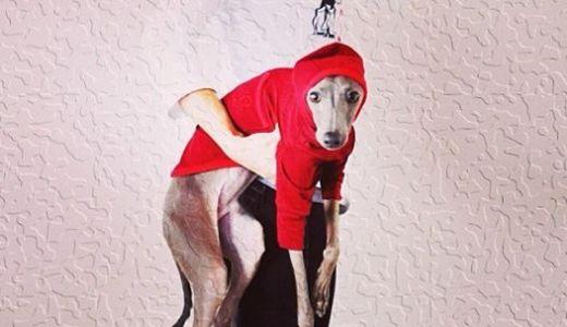 イタグレ服をイタグレに着せる10の理由:犬服は必要なの?選び方は?