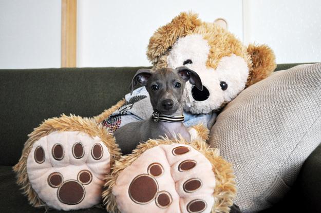 「愛犬のパピー期」の写真は「5,000枚」ぐらいは撮ったほうが良いと言う話