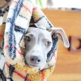 犬服・犬寝袋の発送日に関して
