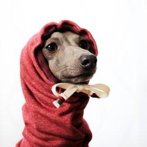 イタグレ・ウィペット犬服 お耳ぬくぬくスヌード&ネックウォーマー 選べる3カラー(ポピーレッド/桜色/イタグレグレイ)