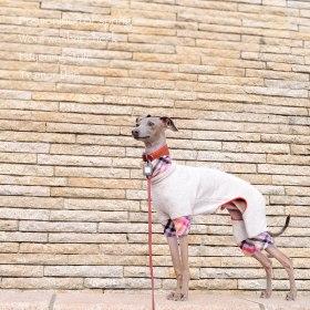 イタグレ・ウィペット犬服|春の予感♪ウールワッシャーチェック重ね着風トレーナー薄手|選べる3タイプ×3カラー