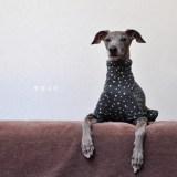 「新作犬服」寒い季節の体調管理(お腹を壊したとき)やお部屋でのリラックス(ぱじゃま)に♪雪降る町 接結ニット 選べる4タイプ×3カラー