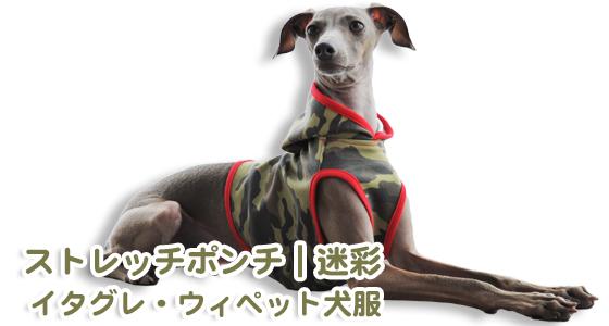 「お客様からのメッセージ」驚き!!!全犬種中最速「サルーキちゃん」のお洋服をご注文いただいた!