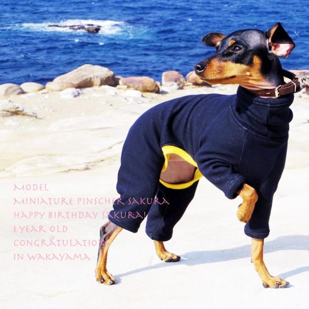 犬服 ロンパース 毛布に包まれたような暖かさと、優しい肌さわりのボンバーヒート(保温)裏起毛2WAYニット 選べる3カラー