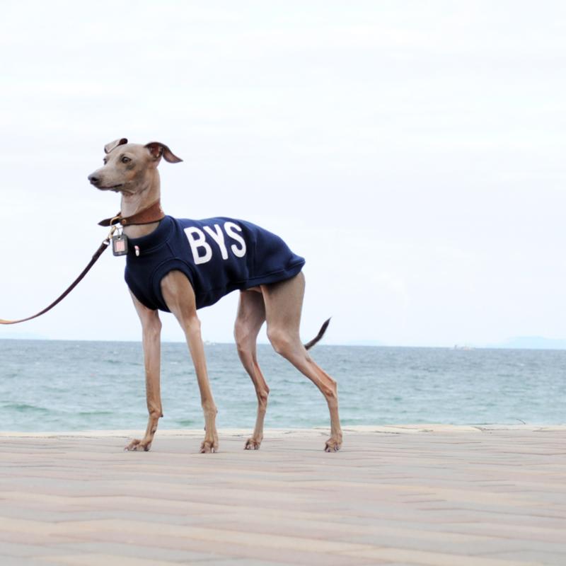 犬服 アルファベットカジュアルスポーツ 選べるリブ3カラー(ネイビー/レッド/イエロー)