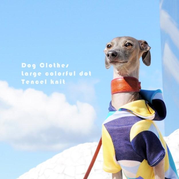 犬服|大きなカラフルドットのテンセルニット|選べる3タイプ×3カラー