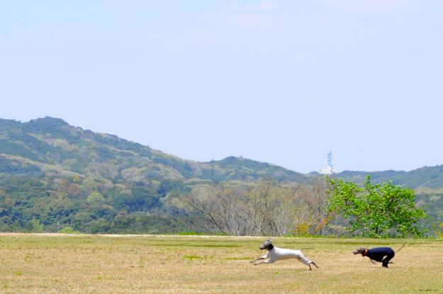 24枚の写真と、さっちゃんのインスタで綴るイタグレ「Heath♂とBuono!♂」の春休みin淡路島!