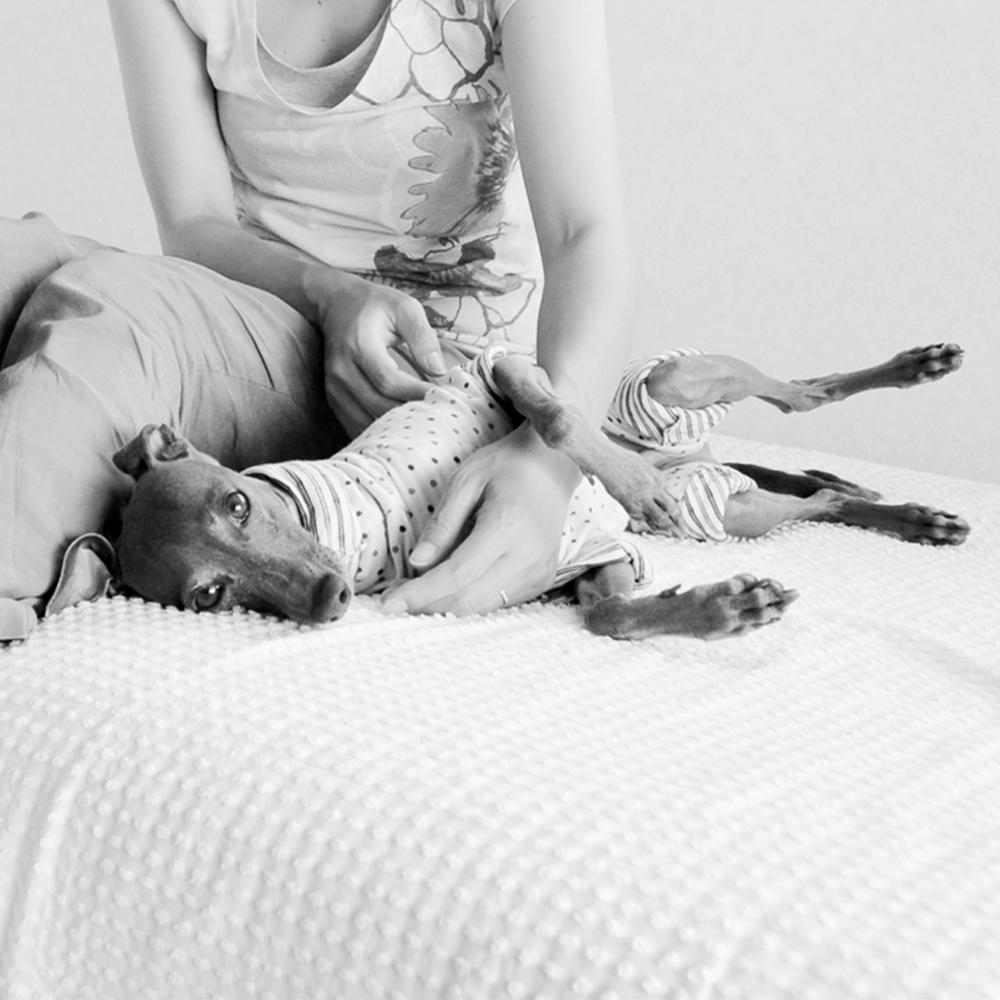 「淡路島で愛犬と暮らす」イタグレBuono!の笑顔を見てると、私達の心も穏やかに。