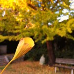 「淡路島散歩」よっちゃん、散歩中に幸せになれる!?2%の「ラッパイチョウ」発見!