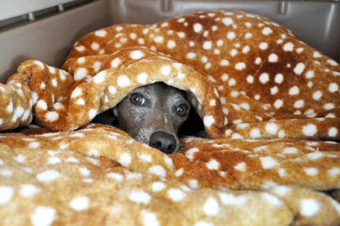 クレートカバーの使い方|【保温・保湿効果抜群!冬も快適な犬の寝床の作り方】クレートカバーの使い方