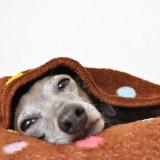 【保温・保湿効果抜群!冬も快適な犬の寝床の作り方】クレートカバーの使い方|クレートカバーの通販