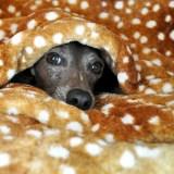 「保温保湿効果抜群!」冬も快適「バリケンネル」と「寝袋」を使ったイタグレB!HOUSEの作り方|バリケンネルカバーも手作りです!