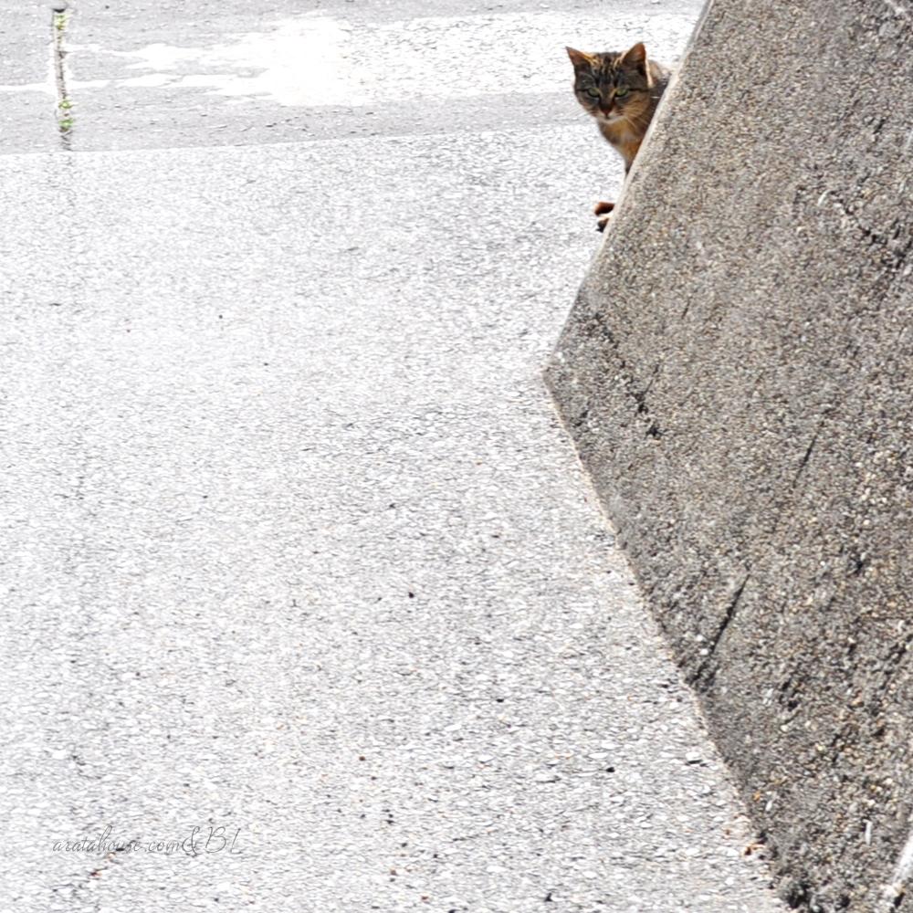 ムキムキでセクシーな太もものイタグレと、チラッと覗く漁港の猫