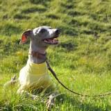 新作犬服「愛犬を紫外線から守ろう」紫外線が増える時期は5月から9月です UVカット加工シルケット天竺ニット