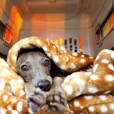 寒い日もぬくぬく、お留守番も安心、カフェでリラックス、愛犬の可愛い写真も撮れちゃう、とっても便利な「寝袋&カフェマット あったかリッチなオシャレ寝袋」