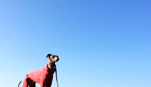 愛犬と淡路島の海辺をちょこっと散歩、鰯の大群にイタグレBuono!は