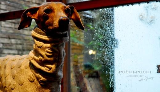 2月の犬服:2月は最低気温が0℃近くまで下がります。暖かな犬服10選